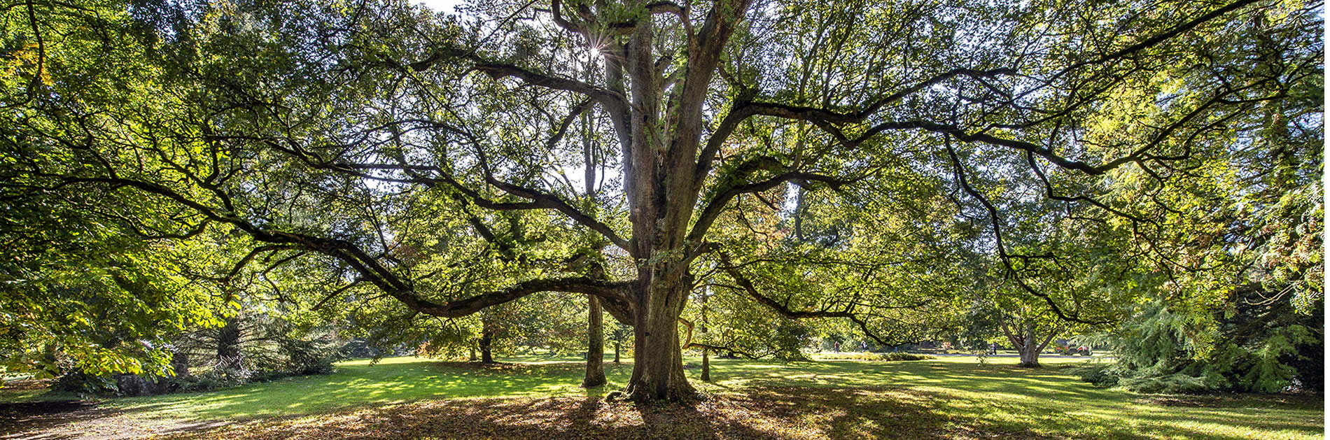 bernard-sun-tree
